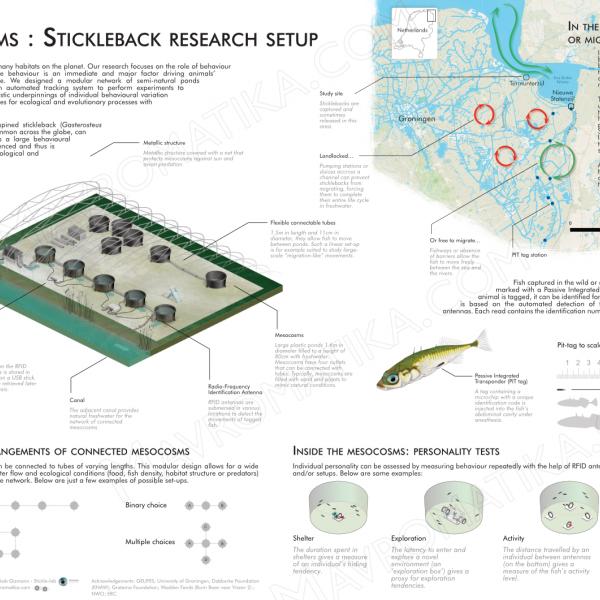 Thumbnail for Stickleback research setup